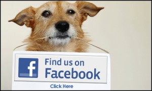 Facebook-ad-dog