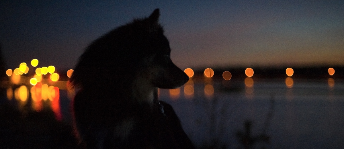 Dog portrait at night
